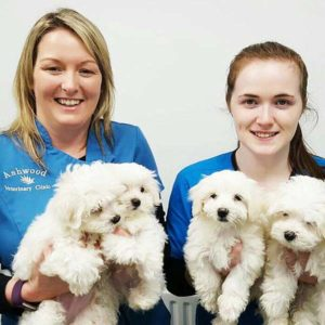 Ashwood - Kelly and Chloe with puppies