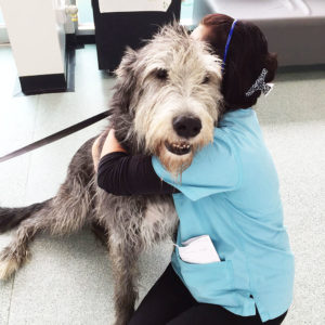 Services - Our fully qualified registered veterinary nurses offer very popular weight clinics