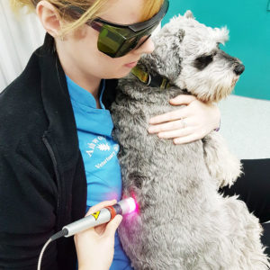 Services - We offer non-invasive K laser therapy for arthritis, soft tissue injuries, and much more