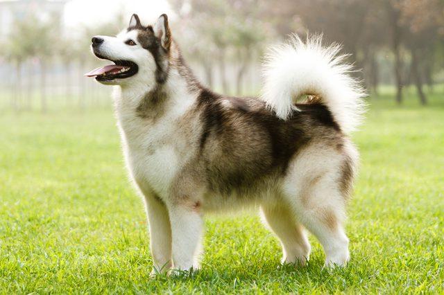 Canine Lungworm Strikes Again