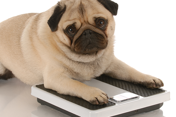 Services - We offer weight clinics run by our veterinary nurses