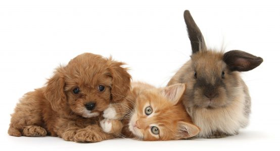 We offer vaccination for dogs, cats, and rabbits, including rabies vaccination for pets travelling abroad.