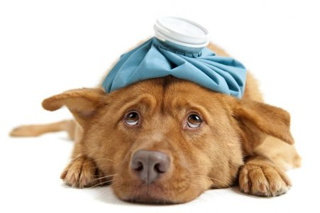 We strongly recommend pet insurance here at Ashwood